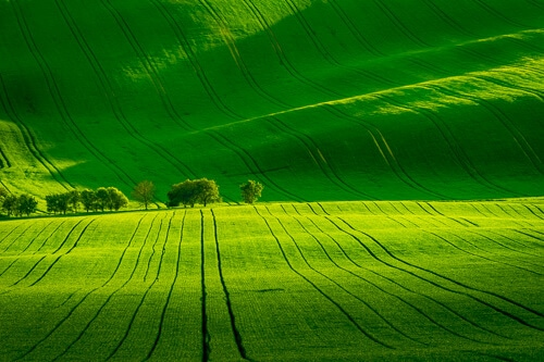 Rolling hills of South Moravia
