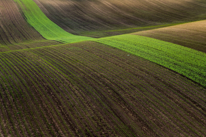 Agricultural stripe in South Moravia
